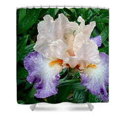 Irresistible Iris Shower Curtain