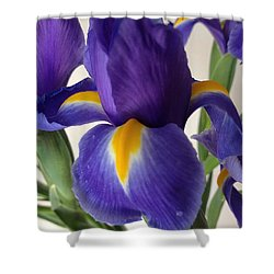 iRus  Shower Curtain