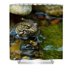 Is There A Prince In There? - Frog On Rocks Shower Curtain
