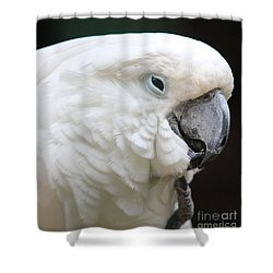 Is There Anybody Out There Shower Curtain