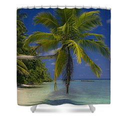 Island Dream Shower Curtain by Dee Cresswell
