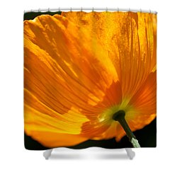 Shower Curtain featuring the photograph Island Poppy I by Sabine Edrissi