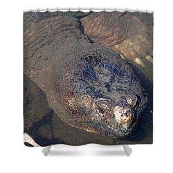 Island Turtle Shower Curtain