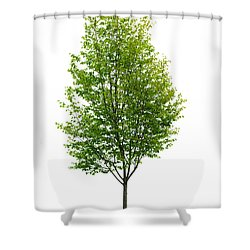 Isolated Young Tree Shower Curtain by Elena Elisseeva