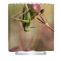 Isophya Savignyi - Bush Cricket Shower Curtain by Alon Meir