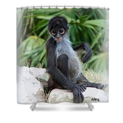 Itchy Belly Shower Curtain by Patrick Witz
