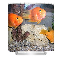 Shower Curtain featuring the photograph It's Not Polite To Stare by Bev Conover
