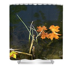 Shower Curtain featuring the photograph It's Over - Leafs On Pond by Brenda Brown
