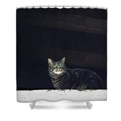 It's Snowing -- Looking Out The Barn Window Shower Curtain by Joy Nichols