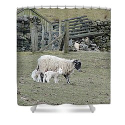 It's Spring Time Shower Curtain by Tiffany Erdman