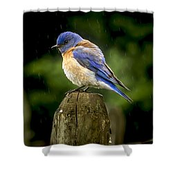 Its Wet Out Here Shower Curtain by Jean Noren