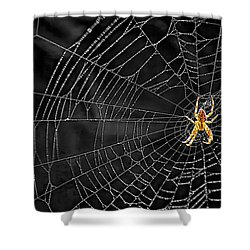 Itsy Bitsy Spider My Ass 3 Shower Curtain