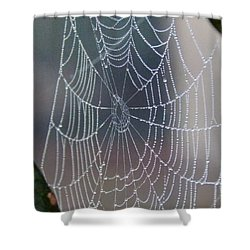 Ittsy Bittsy Spider Shower Curtain by John Glass