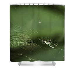 I've Been Wainting For So Long Shower Curtain