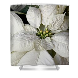 Ivory Poinsettia Christmas Flower Shower Curtain by Jennie Marie Schell