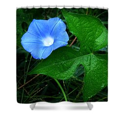 Shower Curtain featuring the photograph Wild Ivyleaf Morning Glory by William Tanneberger