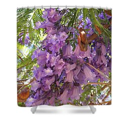 Jacaranda Blossoms 2 Shower Curtain by Nancy Kane Chapman