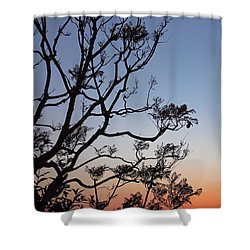 Jacaranda Sunset Shower Curtain