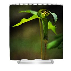 Jack-in-the-pulpit Shower Curtain by Rebecca Sherman