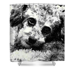 Shower Curtain featuring the photograph Jack by Lenore Senior