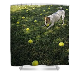 Jack Russell Terrier Tennis Balls Shower Curtain