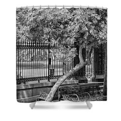 Jackson Square Bench And Tree Shower Curtain
