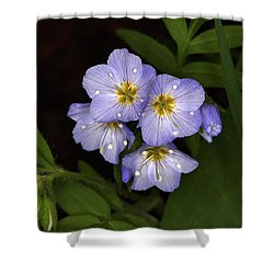 Shower Curtain featuring the photograph Jacobs Ladder by Alan Vance Ley