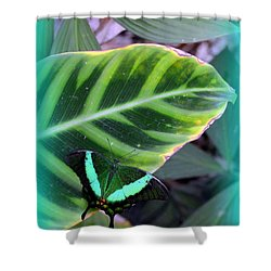 Jade Butterfly With Vignette Shower Curtain by Carla Parris