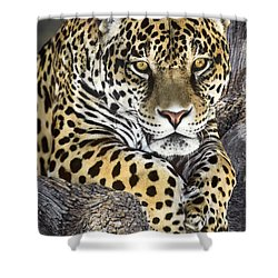 Jaguar Portrait Wildlife Rescue Shower Curtain by Dave Welling