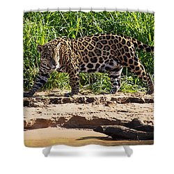 Jaguar River Walk Shower Curtain