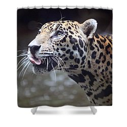 Shower Curtain featuring the photograph Jaguar Sticking Out Tongue by Shoal Hollingsworth