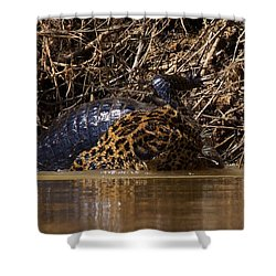 Jaguar Vs Caiman 3 Shower Curtain