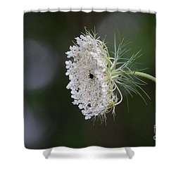 jammer Garden Lace 2 Shower Curtain by First Star Art