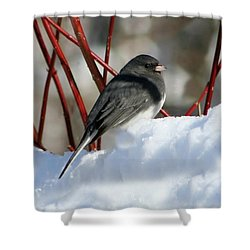 January Snow In New England Shower Curtain
