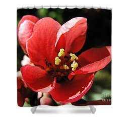 Shower Curtain featuring the photograph Japanese Apple Flower by Vesna Martinjak