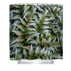 Shower Curtain featuring the photograph Japanese Ferns by Kathryn Meyer
