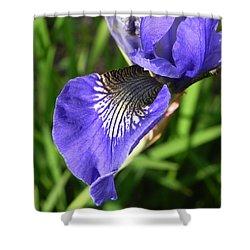 Elegance Shower Curtain by Cheryl Hoyle