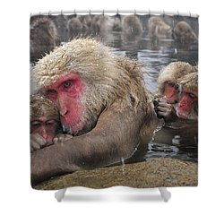 Shower Curtain featuring the photograph Japanese Macaque Grooming Mother by Thomas Marent