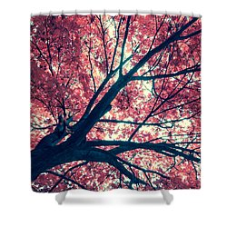 Japanese Maple - Vintage Shower Curtain by Hannes Cmarits