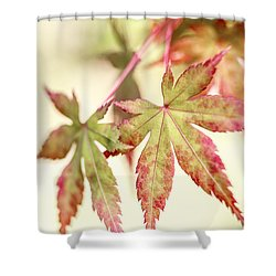 Japanese Maple Shower Curtain by Caitlyn  Grasso