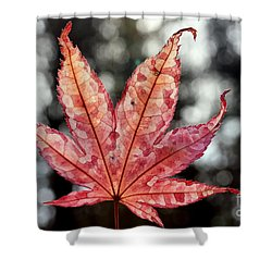 Japanese Maple Leaf - 2 Shower Curtain