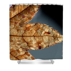 Japanese Maple Leaf Brown - 1 Shower Curtain