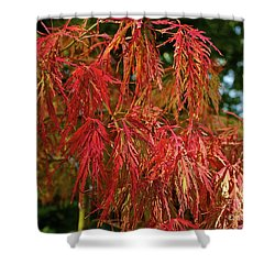 Japanese Maple Shower Curtain by Linda Bianic