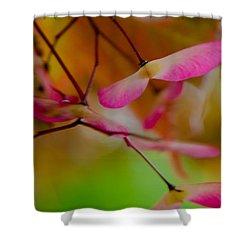 Japanese Maple Seedling Shower Curtain