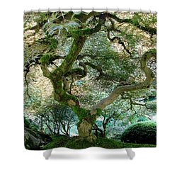 Shower Curtain featuring the photograph Japanese Maple Tree II by Athena Mckinzie