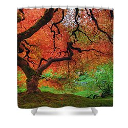 Japanese Maple Tree In Autumn Shower Curtain