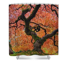 Japanese Maple Tree In Fall Shower Curtain