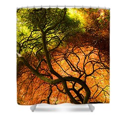 Japanese Maples Shower Curtain