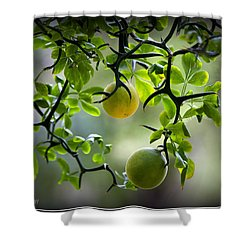 Japanese Orange Tree Shower Curtain