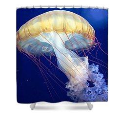 Japanese Sea Nettle Chrysaora Pacifica Shower Curtain